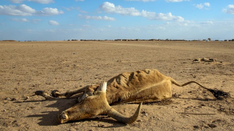 Thousands of livestock have perished as a result of erratic rains in Ethiopia during 2015 (Pic: Abiy Getahun/Oxfam)