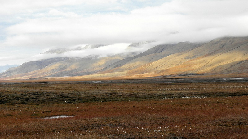 Arctic tundra (Flickr/Billy Lindblom)