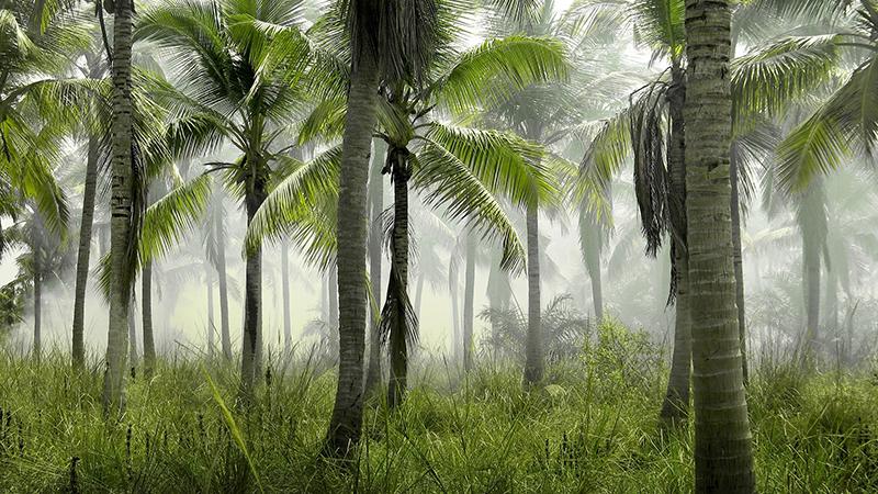 palm-trees-923976_1920