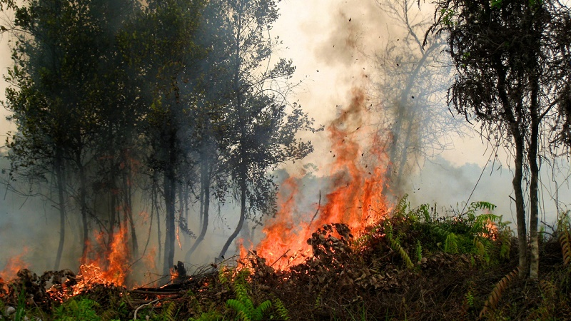 El Nino fanned the flames of devastating forest fires across Indonesia (Flickr/CIFOR/Rini Sulaiman)