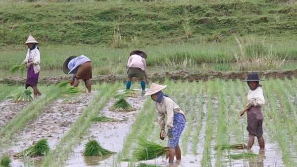 Southeast Asian crops suffer as rains fail