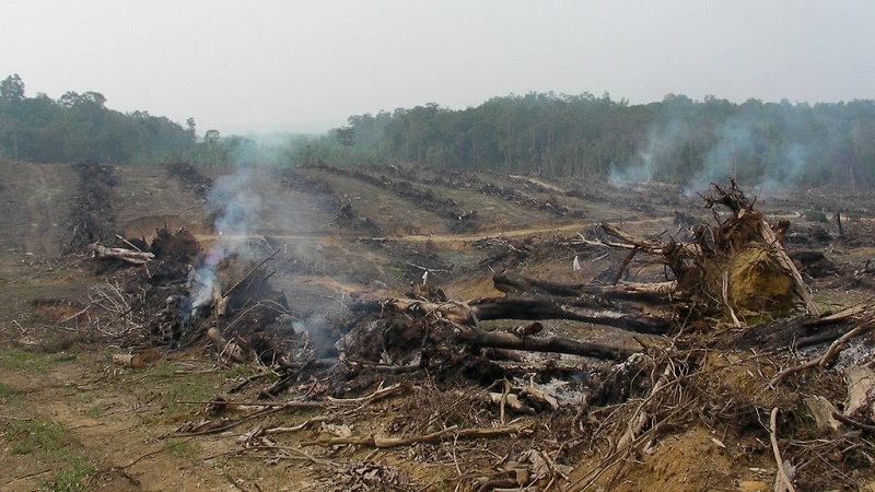 Fire is the cheapest way to clear land for cash crops, but it comes at a climate cost (Flickr/Rainforest Action Network)