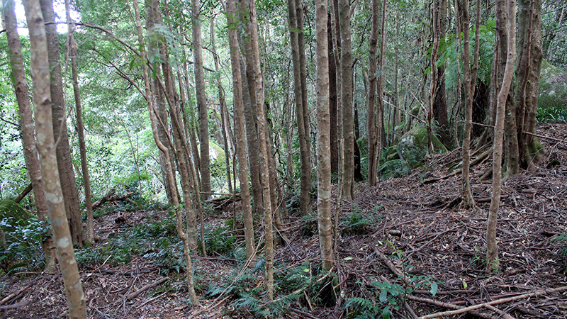 Rainforest in Tasmania regenerates after gold mining destroyed it 100 years ago (Flickr/ Pete the Poet)
