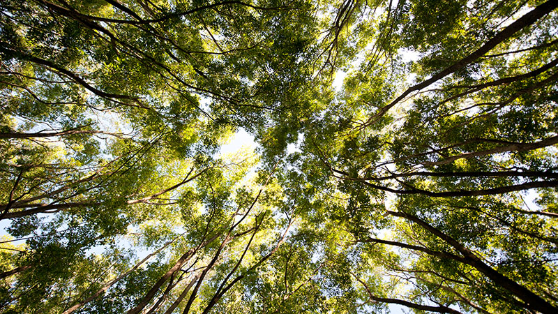 Looking up to the canopy in Tanzania (Flickr/ Jürgen Schmücking)