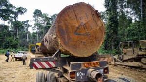 Alarm as DR Congo considers opening rainforest to loggers