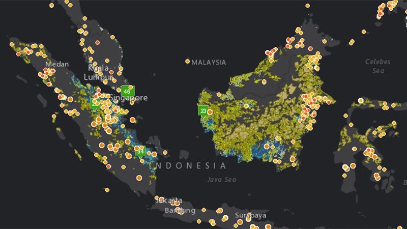 Major fires recorded by Global Forest Watch from data supplied by NASA between June-October 2015. Blue = peatlands, lime green = palm oil (Pic: Global Forest Watch}