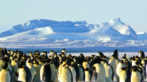 Antarctica geoengineering idea flawed say scientists