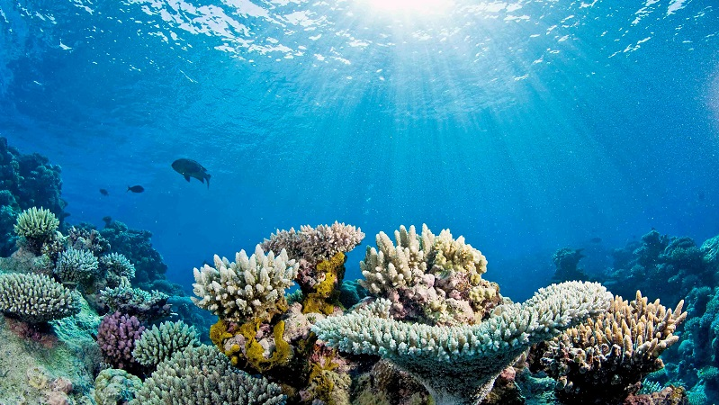 Ocean Acidification Is Slowing Coral Reef Growth Study