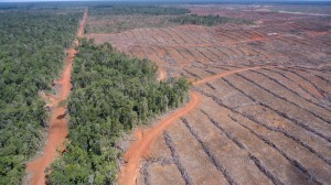 EU palm oil restrictions risk sparking trade spat