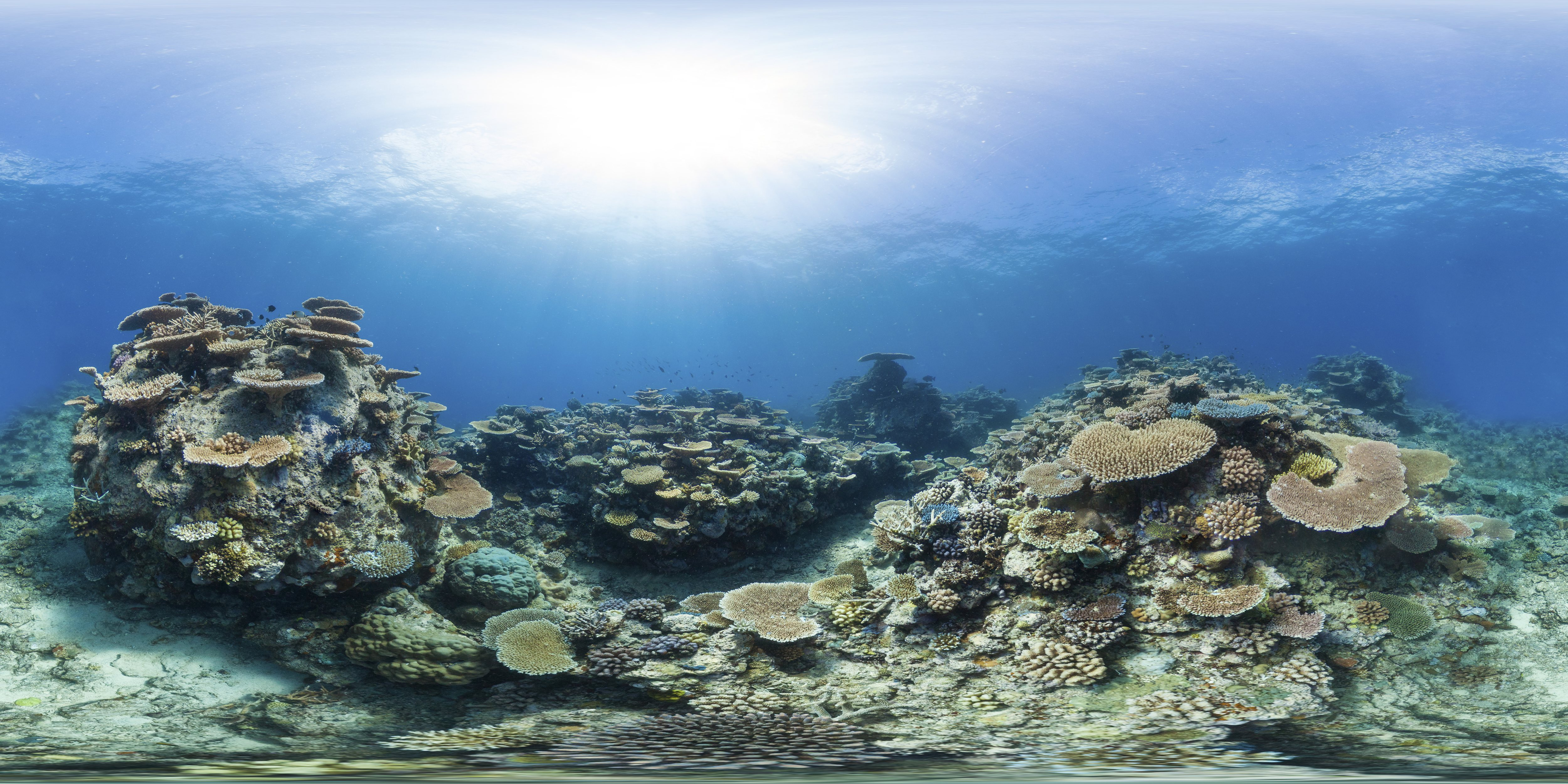 Healthy coral on Wilson Reef in the Great Barrier Reef marine park. Photo: XL Catlin Seaview Survey/Underwater Earth