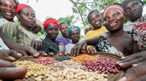 Climate-smart beans offer hope to Uganda's farmers