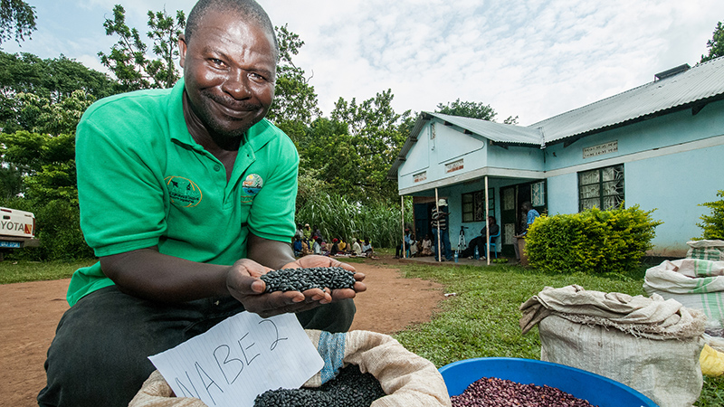 New bean varieties each have different qualities: drought resilience; disease tolerance; high iron (Pic: CIAT/Flickr)