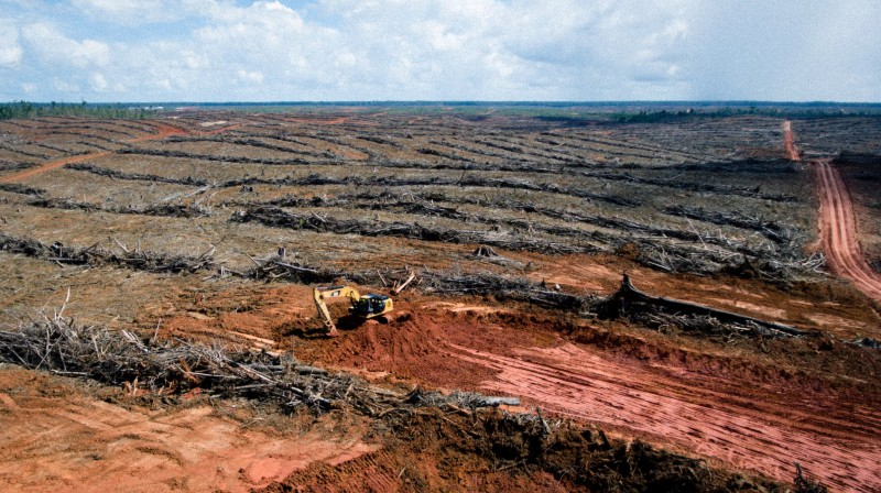 Deforestation in Korindo oil palm plantation, Papua (Pic: Mighty)