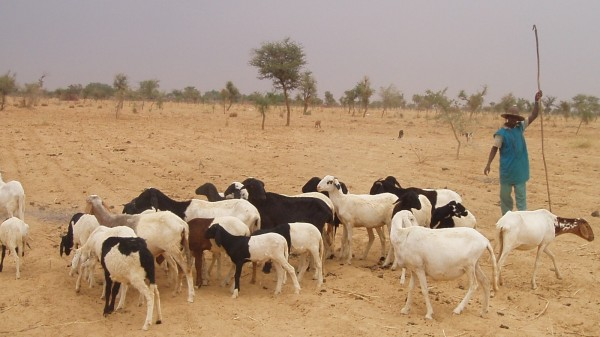 Climate wars: is the Sahel the first battle zone?