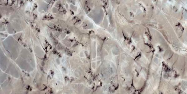Satellite imagery reveals blackened earth around dozens of makeshift oil refineries near Deir ez-Zor, Syria. Source: Pax