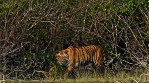 UN tells Bangladesh to halt mangrove-threatening coal plant