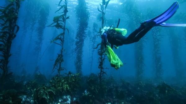 Ocean heatwave destroys Tasmania's unique underwater jungle