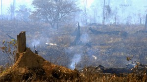 Brazil needs new coalitions to halt forest clearance surge