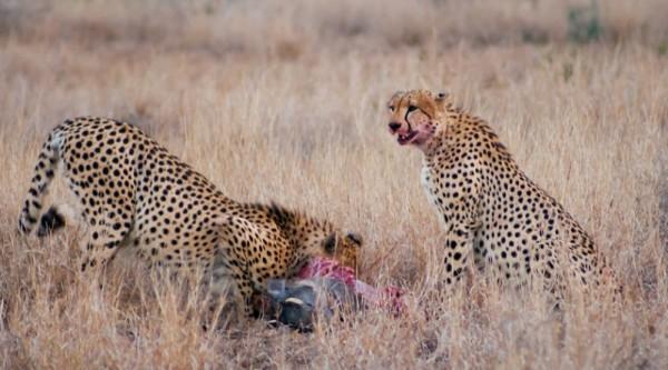 Iconic Kruger game park faces bleak climate future