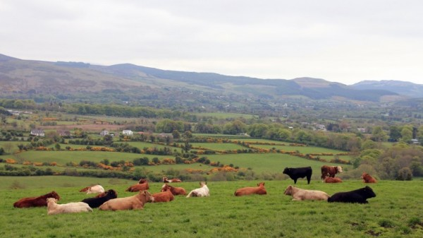 How Ireland bent EU climate rules to protect farting cows