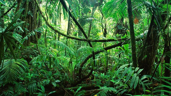 Carbon sink larger than England found in Congo jungle