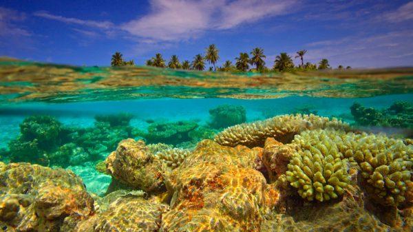 Maldives regime imperils coral reefs in dash for cash