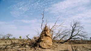 Dryland expansion to hit food crops as planet warms