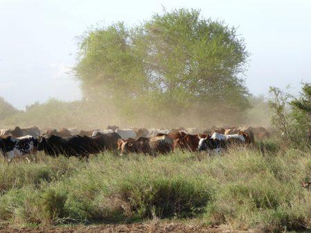 Women's co-op dairy in Kenya breaks agricultural glass ceiling