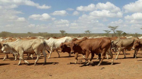 Kenya places climate disorder at centre of UN security council bid