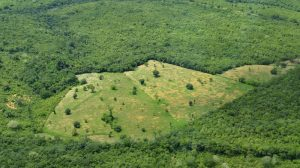 Brazilian Amazon lost 660,000 hectares of forest in last year