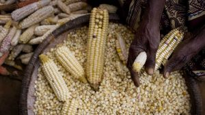 Kenya's food crisis: Drought raises prices and political tensions