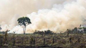 Amazon forest fires pushing climate change 'beyond human control'