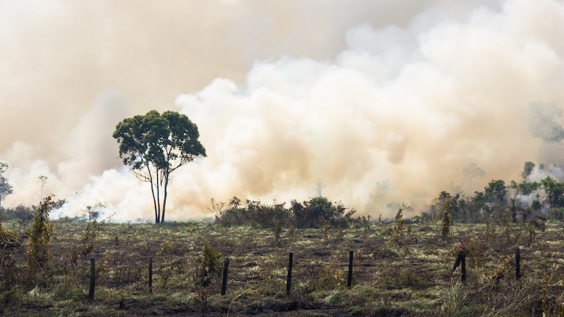Amazon Forest Fires Pushing Climate Change Beyond Human Control