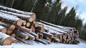 Logging surge threatens a quarter of Estonia's forest, warn conservationists