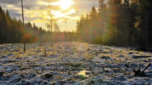 Climate Weekly: Estonia's shrinking forests