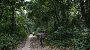 African forest communities must be heard in the fight against climate change