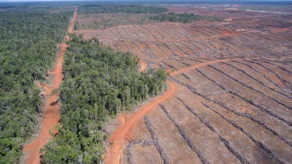 'Norway cannot stop deforestation alone', says environment minister