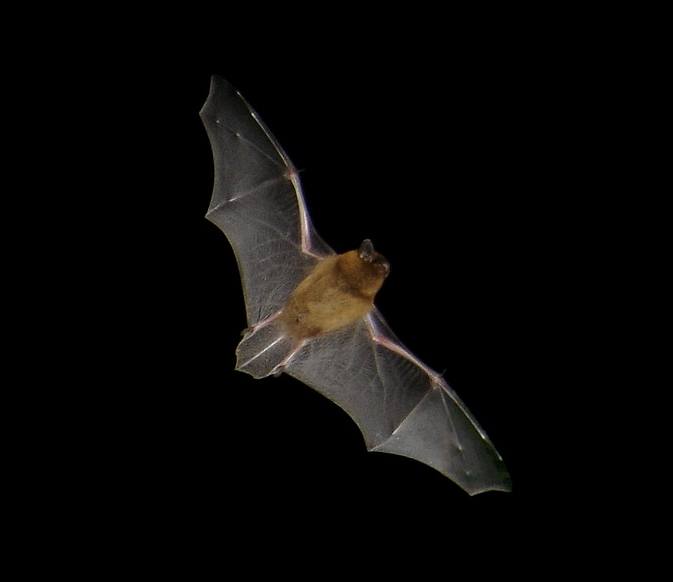 Dutch Town Installs More Efficient Bat Friendly Lighting