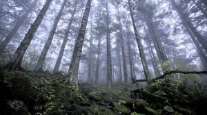Poland pushing forest agenda as climate host, leak shows