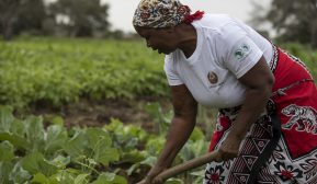 After devastation, a new beginning for farmers in Mozambique