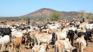 Valley dams offer half a hope to drought-hit Ugandan herders
