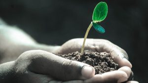 Is dirt the key to a cleaner future?