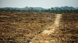 Five years after New York declaration, forest promises go unmet