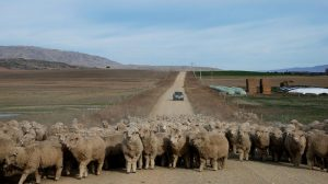 New Zealand's farmers have a chance to be climate leaders