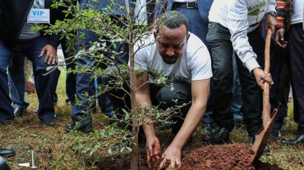 Ethiopia bids to plant four billion trees in green push
