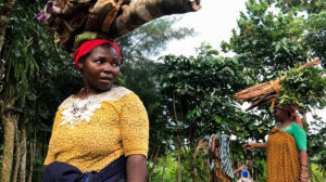 Top environmental funders adopt proactive gender programme