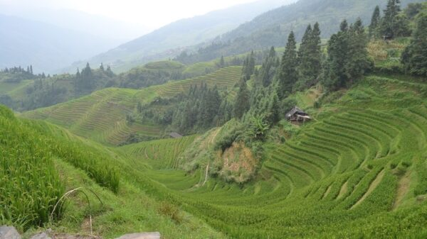 We can grow more climate-friendly rice