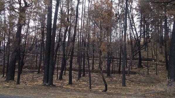 Australia's climate change polarisation hampers long-term bushfire fixes