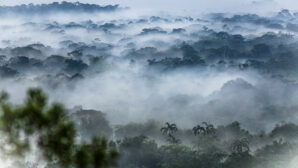 Indigenous lands, protected areas limit Amazon's carbon emissions