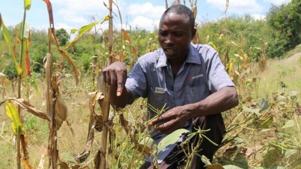 Locusts plague destroys livelihoods in Kenya but 'biggest threat yet to come'